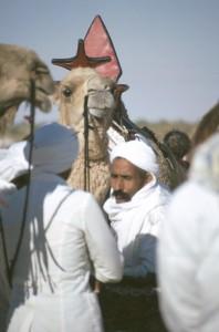 großes Kamelrennen