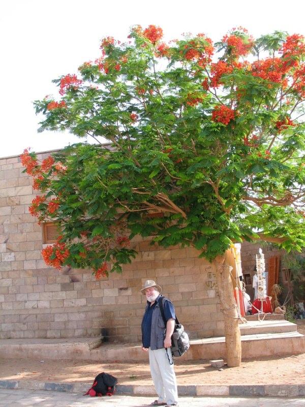 Ägypten 2006 035